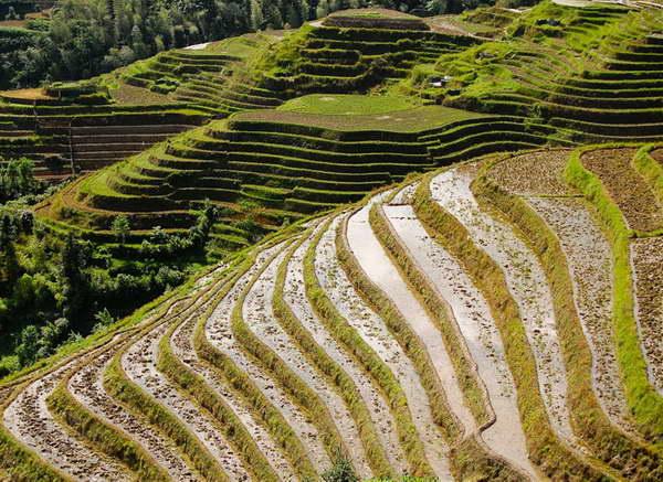 Longsheng dragonback rice terraces tours by Yangshuo Mountain Retreat